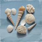 Shell Collection II by Bill Philip