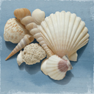 Shell Collection IV by Bill Philip