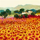 Sunflower Sunset, Tuscany by Hazel Barker