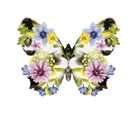 Fantasia Floral Butterfly by Kristine Hegre
