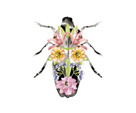 Fantasia Floral Beetle by Kristine Hegre