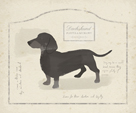 Dog Club - Dachshund by Clara Wells