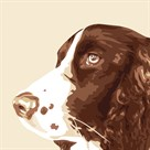 Springer Spaniel by Emily Burrowes
