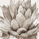 Cereus Echeveria - Fawn by Tania Bello