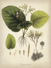 Vintage East Indian Plants I by Maria Mendez