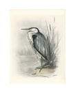 Common Heron by Lilian Medland