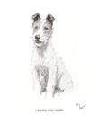 Meynell Hunt Terrier by Cecil Aldin