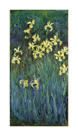 Yellow Irises, c.1914-17 by Claude Monet