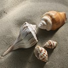Shell Shore I by Bill Philip