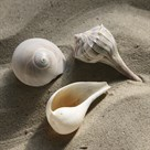 Shell Shore II by Bill Philip