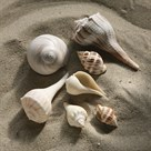 Shell Shore IV by Bill Philip