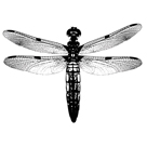 Dragonfly I by Clara Wells