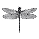 Dragonfly II by Clara Wells