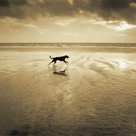 Dog on the Beach, West Wittering by Jo Crowther