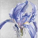 Iris in Argent by Sarah Caswell