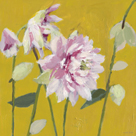 From My Garden - Aquilegia by Charlotte Hardy