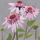 From My Garden - Echinacea by Charlotte Hardy
