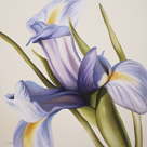 Iris Wind by Carolina Alotus