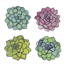 Succulents by Sandra Jacobs
