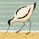 Avuncular Avocet by Catriona Hall