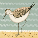 Gracious Greenshank by Catriona Hall