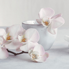 Orchid - Tranquil by Assaf Frank