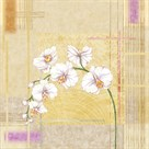 Orchid Memories II by Linda Wood