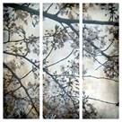 Cherry Blossoms Triptych by Tony Koukos