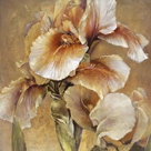 Golden Iris by Carney