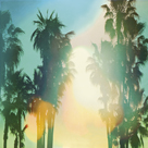 California Cool - Palm by Chuck Brody