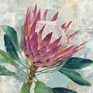 Protea Majestic by Tania Bello