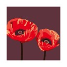 Poppies by Emily Burrowes