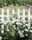 Picket Fence - Pretty by Mark Chandon
