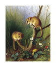 Dormice by Archibald Thorburn