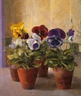 Four Pots of Auriculas by John Morley