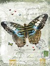 Papillon VI by Ken Hurd