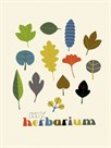 My Herbarium by Sophie Ledesma