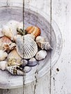 Nantucket Shells I by James Guilliam