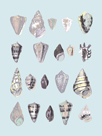 Graphic Seashells I by Joni Whyte