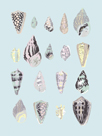 Graphic Seashells II by Joni Whyte