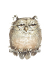 Owl VII by Judy Rossouw