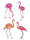 Flamingo Fandango II by Sandra Jacobs