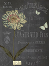 Vintage Botanical - Scabious by Stephanie Monahan