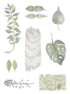 Botanical Studies by Sandra Jacobs