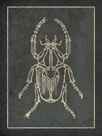 Historia Insectorum Generalis I by The Vintage Collection