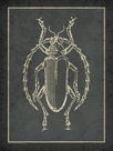 Historia Insectorum Generalis V by The Vintage Collection