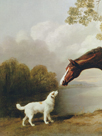 Bay Horse and White Dog - Focus by George Stubbs