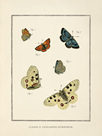 Papilio Coetus by The Vintage Collection