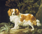 King Charles Spaniel by George Stubbs