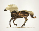 Horse in Canter by Tania Bello